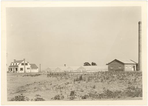 Image of Orchid range.  Arboretum.