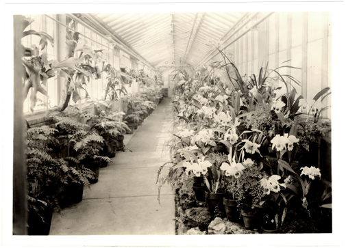 Image of Orchid display in Gray Summit greenhouse passageway.  Negative available at PHO 2006-2854.  Mounted with PHO 2006-2864.