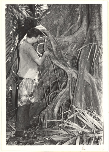 Image of Research.  Barro Colorado Island.  Examining the base of a large Ficus (fig tree).  MBG V. 57, No. 6, Nov.-Dec. 1969.  Mounted with PHO 2007-0123.