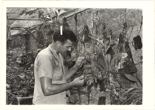 Image of Research.  Barro Colorado Island.  Inspecting epiphytes for flowers - unusual plant.  Though they be sterile are carried back from the field provided they are epiphytes and can survive such a change.  In due time, they usually flower here in the laboratory's epiphyte house.  Then specimens can be made of the plants.  Mounted with PHO 2007-0122.