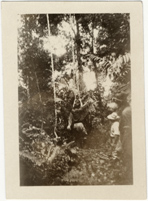 Image of Tropical forest