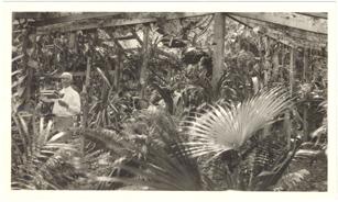 Image of Powell in his garden.