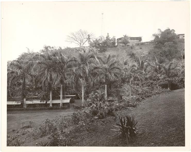 Image of Tropical Station.  Balboa, Panama.