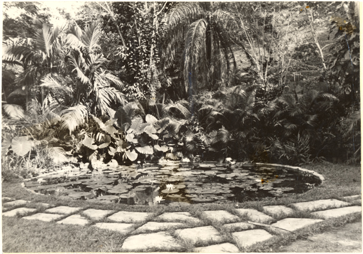 Image of New lily pool.