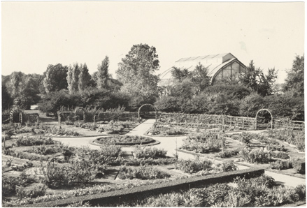 Image of Rose Garden.  Palm House in background.