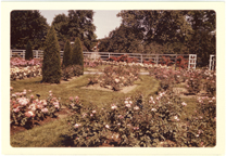 Image of Linnean Rose Garden.  Mounted with PHO 2007-0495 and PHO 2007-0486.