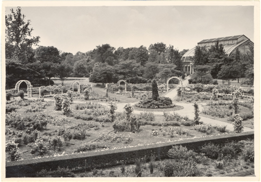 Image of Linnean Rose Garden with Palm House in background.