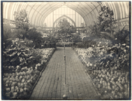 Image of Spring Flower Show, April 12, 1914.  Mounted with PHO 2007-0955 and PHO 2007-0956.
