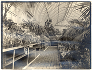 Image of Spring Flower Show, April 12, 1914.    North section of 1912 Palm House range, now (in 1970) north Desert House.  Mounted with PHO 2007-0954 and PHO 2007-0955.