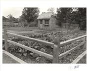 Image of Demonstration vegetable garden 1981.  Image received from Elizabeth Cornelison 1/29/1990