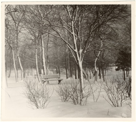 Image of Winter scene in Grove south of Main Conservatories.