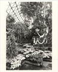 Image of Climatron