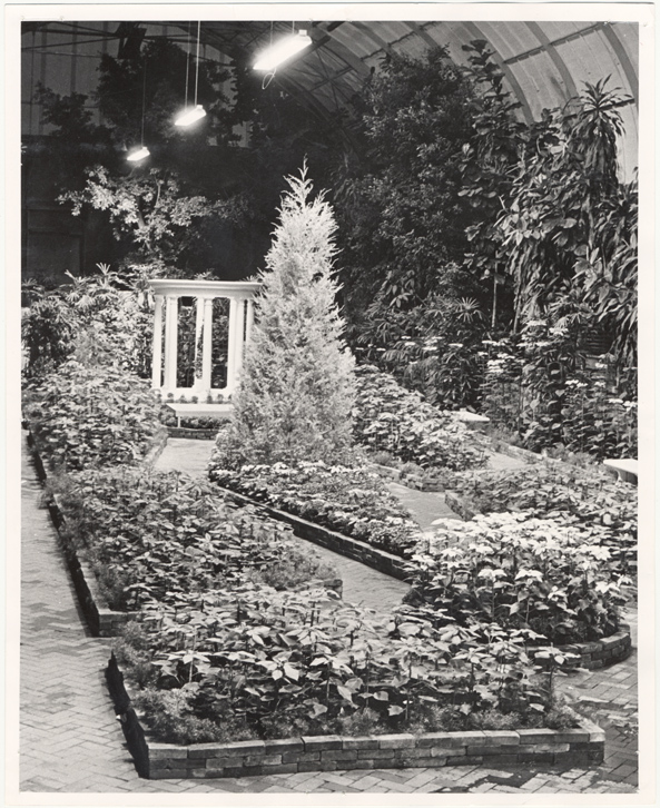 Image of Christmas Flower Show.