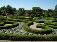 Image of Blanke Boxwood Garden