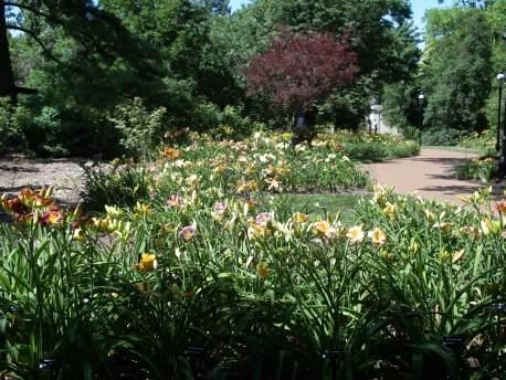 Image of Jenkins Daylily Garden