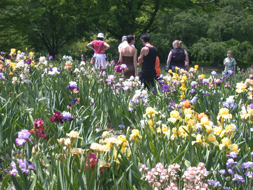 Image of Alice Hahn Goodman Iris Garden