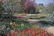 Image of Heckman Bulb Garden view.