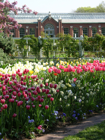 Image of Bulb Garden view, Missouri Botanical Garden