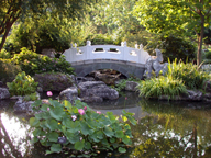 Image of View inside Chinese Garden showing bridge and lotus.
