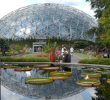 Image of View of exterior of Climatron and lily pools in summer.