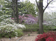 Image of View of English Woodland Garden in spring.