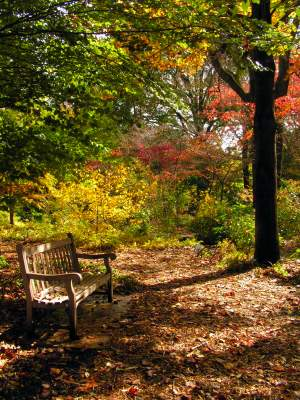 Image of View of English Woodland Garden in fall.