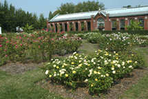Image of View of Gladney Rose Garden, Linnean House in background.