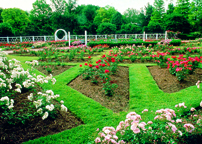 Image of View of Gladney Rose Garden.
