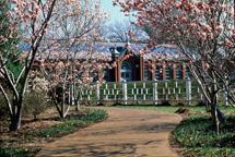 Image of Keifer Magnolia Grove.