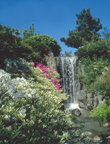 Image of Japanese Garden showing water fall..