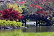 Image of Japanese Garden showing drum bridge.