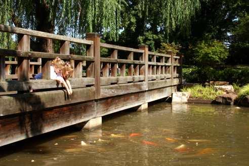 Image of Japanese Garden bridge showing children feeding the koi.