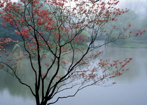 Image of Japanese Garden in mist.
