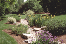 Image of Dry streambed garden in the knolls.