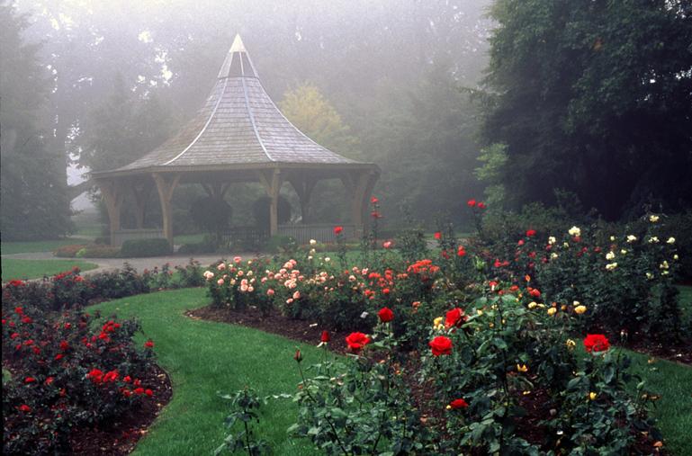 Image of Anne L. Lehmann Rose Garden view.