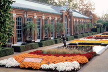 Image of Linnean House front showing mums in bloom in the Swift Family Garden.
