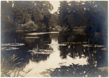 Image of Water liliies in lake. Location unknown. Possibly Royal Botanic Gardens, Kew.