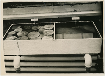 Image of Water lilies in growing tanks showing plants grown from 1949 seeds and 1950 seeds.