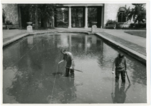 Image of Garden horticulture staff members planting water lilies in the main lily pools using string lines.