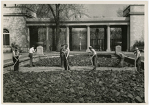 Image of Garden horticulture staff members tilling the original dirt bottom of the main lily pools.