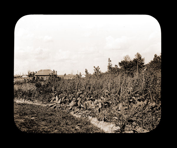 Image of Garden view with the Main Conservatory (1868-1916) in the background.  View is looking to the north.