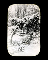 Image of Garden bench beside a tree, with snow covering all.