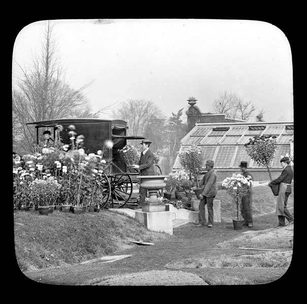 Image of Garden staff loading horse drawn carriage with plants after show at the Missouri Botanical Garden.  West wing of the Main Conservatory is visible in background. See also PML 1980-0651 with the same title and date.