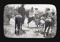 Image of Collecting at Tehuacan.  A burro load from the Cerro Colorado, Tehuacan.
