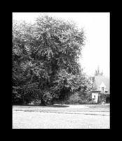 Image of Maple tree with the Cleveland Avenue Gatehouse in the background.