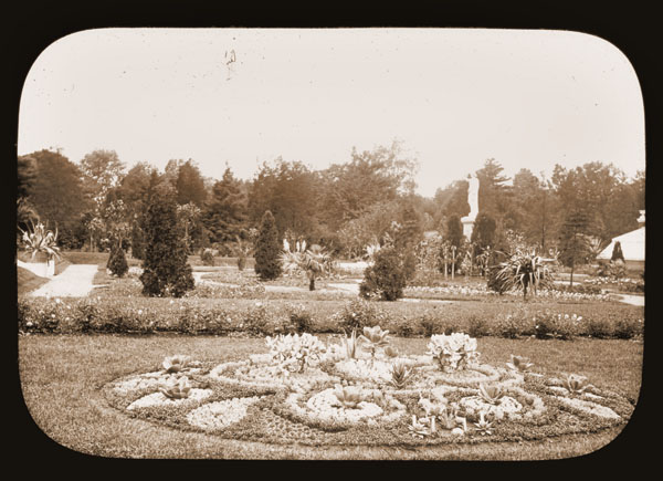 Image of Bedding with succulents in the parterre c.1900.  Statue of Juno in background.