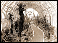 Image of Interior view of the Cactus House in 1915.  The Cactus house was located in a wing of the Palm House.