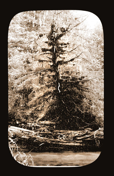 Image of Lichen growth. Harriman Alaska Expedition, 1899.