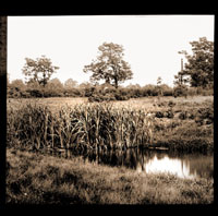 Image of North American Tract.  Cattails growing in pond.