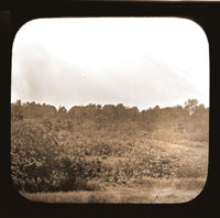 Image of View of plantings in the North American Tract.